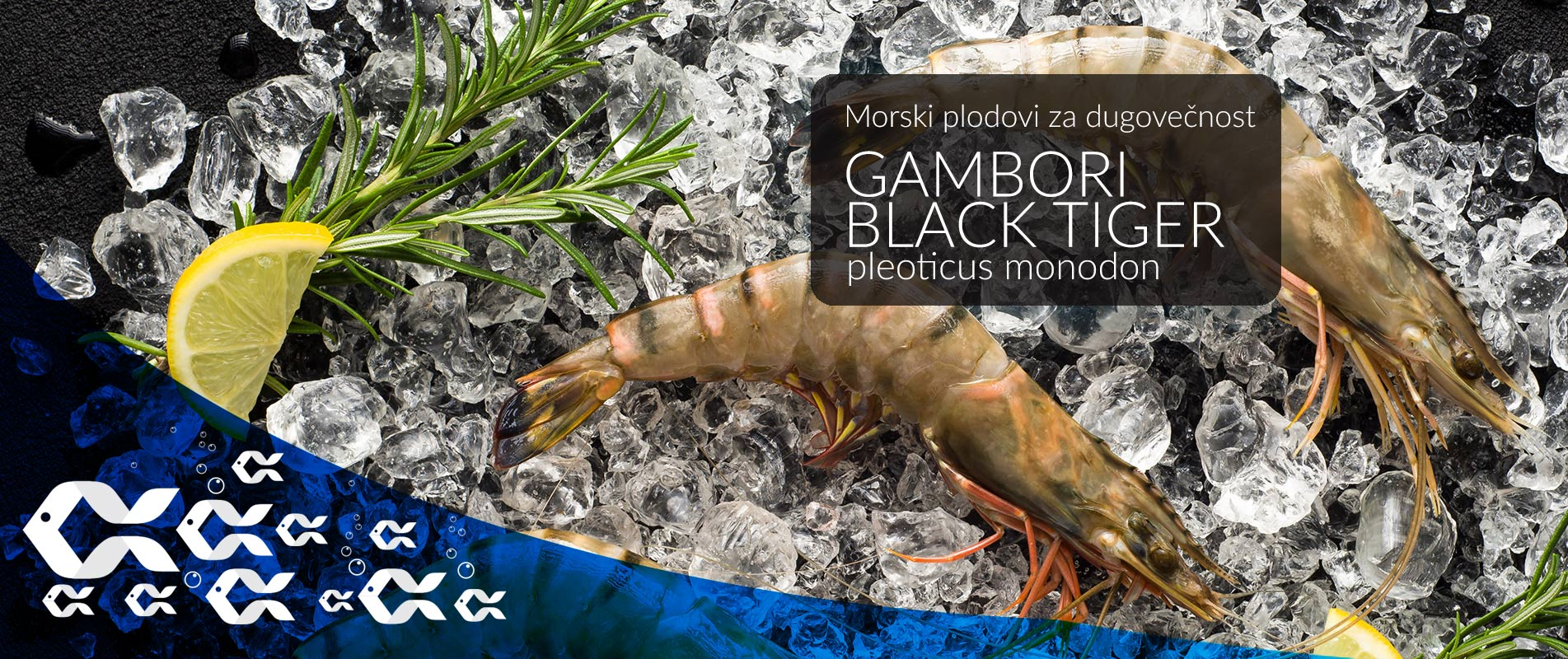 gambori black tiger